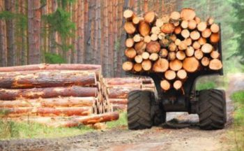 African hardwood business reports