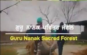 Guru Nanak Sacred Forest