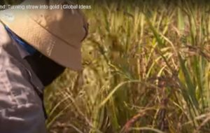 Thailand Turning Straw into gold