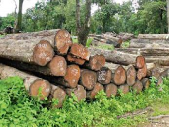 Logjam at Forest Department's Timber Depots